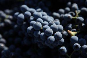 grapes Fonseca