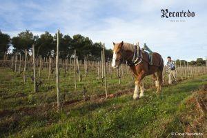 06_RECAREDO Llaurat vinya del Turo d'en Mota 1