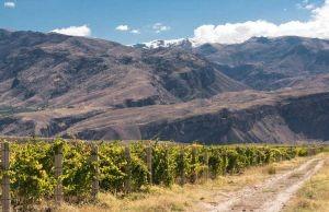 Armenia Wine 2a