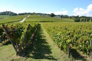 Sagrantino-wijngaard van Arnaldo Caprai