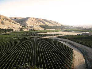 Te Muna Road wijngaard, Craggy Range