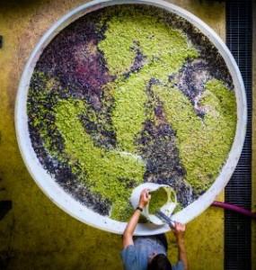 Sgiraz en viognier fermenteren samen (Clonakilla)