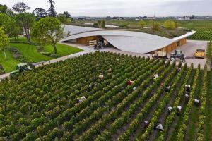 Oogst bij Cheval Blanc (foto: F. Poincet)