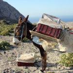 Aandacht voor Griekenland op nieuwe locatie Goods & More