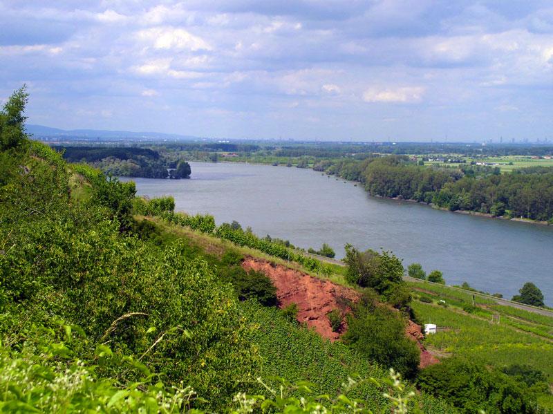 De beroemde Roter Hang bij Nierstein am Rhein