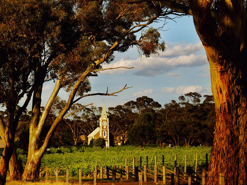 Hill of Grace wijngaard