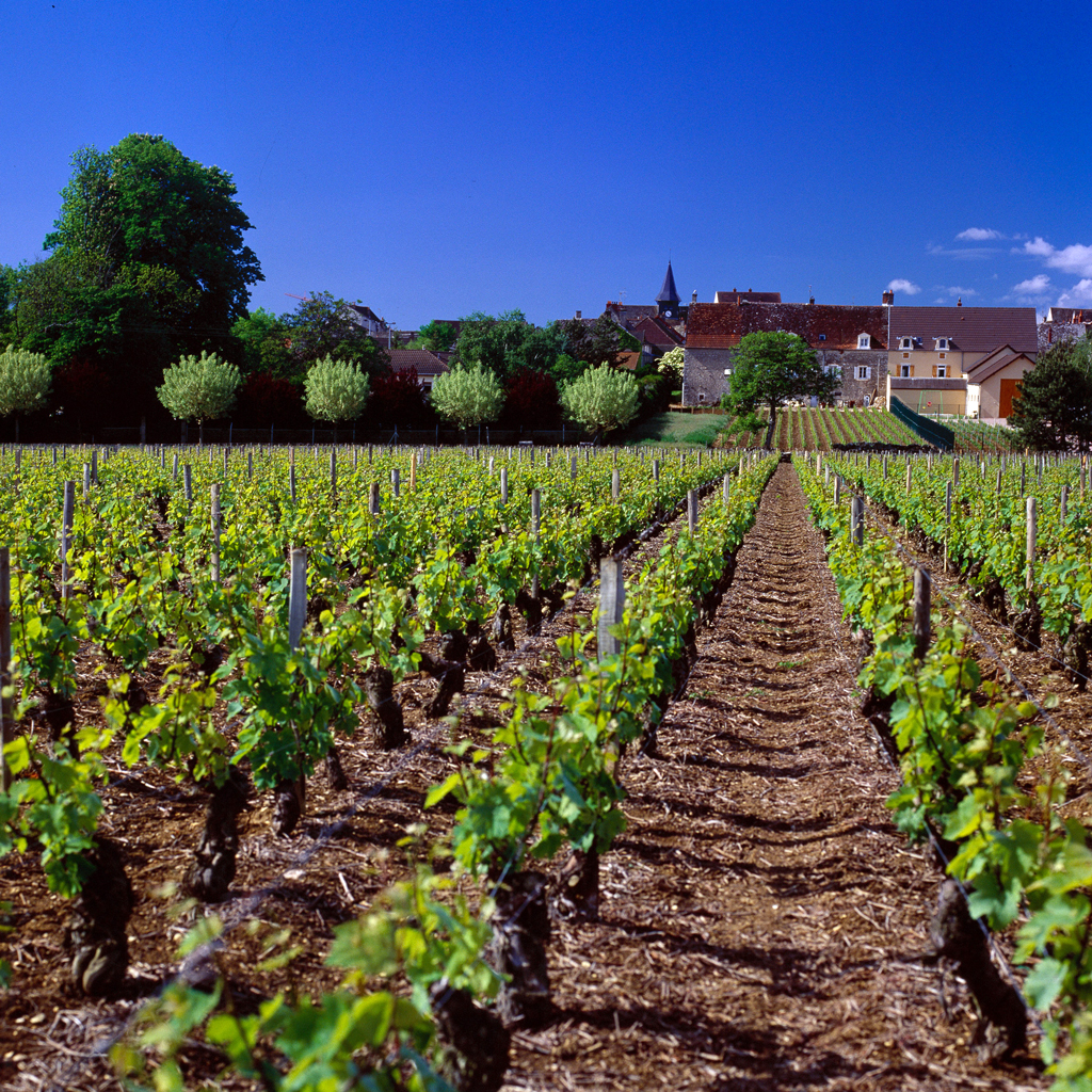 Puligny-Montrachet (foto BIVB – Denis Gadenne)