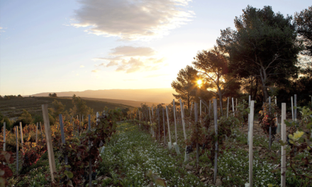 Provencewijnen voor de echte liefhebber