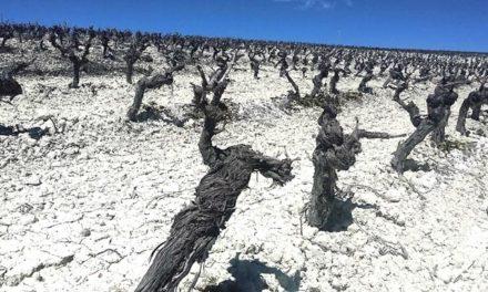 De zes smaken van wijn: zout