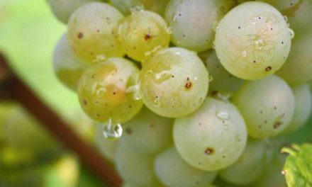 John Bindels – Wijn van straks