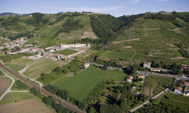 Wijnen uit de Rhônevallei