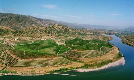 Onze favoriete Portugese wijnen