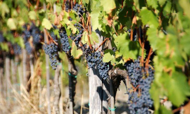 John Bindels – Wijncritici door de mand