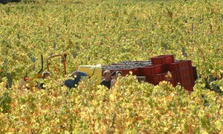 Jacky Blot: 'Biodynamische wijnbouw is een kwestie van overleven'