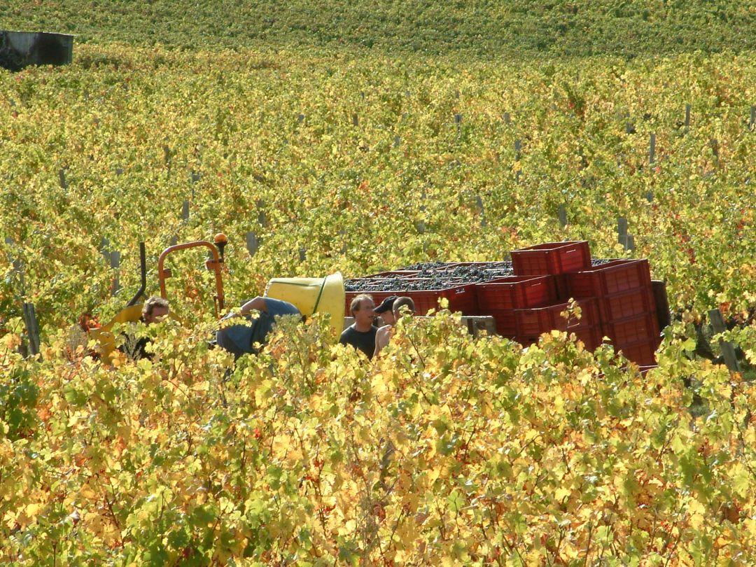 wijngaard Blot