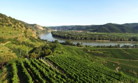 Wachau: terroir troef