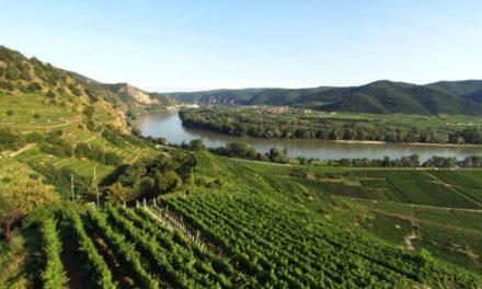 Wachau: terroir troef