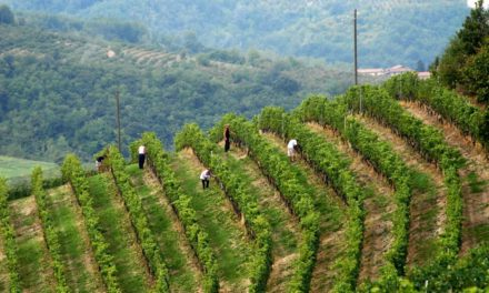 John Bindels – 'DÉ' oudbakken wijnwebsite