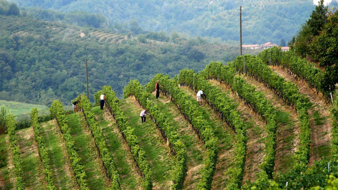 wijngaard barolo