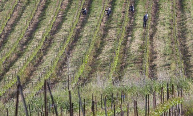 Israëlische wijnen van Well of Wine