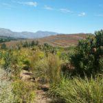 Spioenkop: karaktervolle terroirwijnen uit Elgin