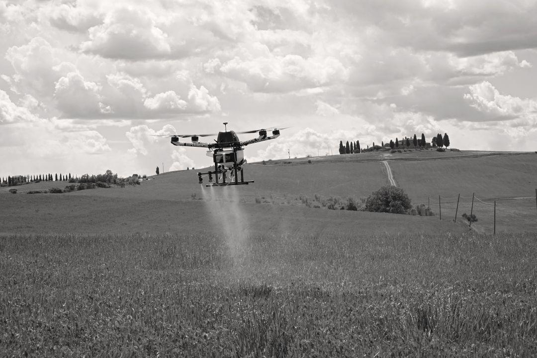 Graanvelden worden besproeid met een drone