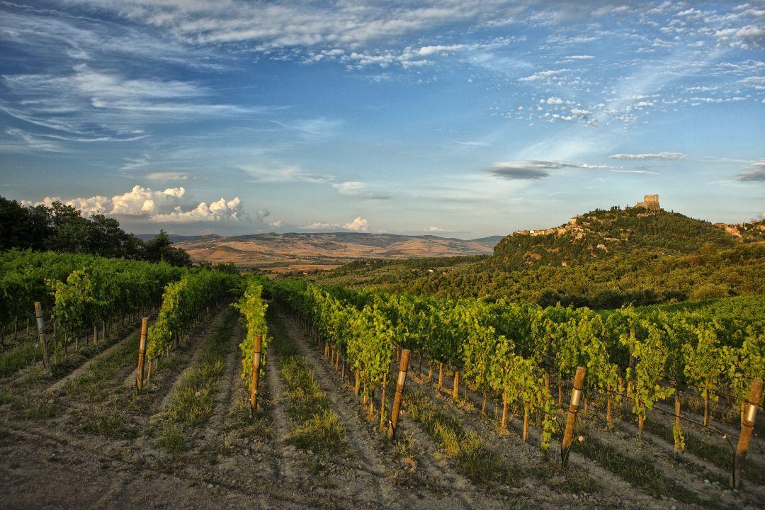 Wijngaarden van Podere Forte