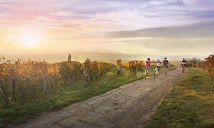 Wijnen proeven in Moravië