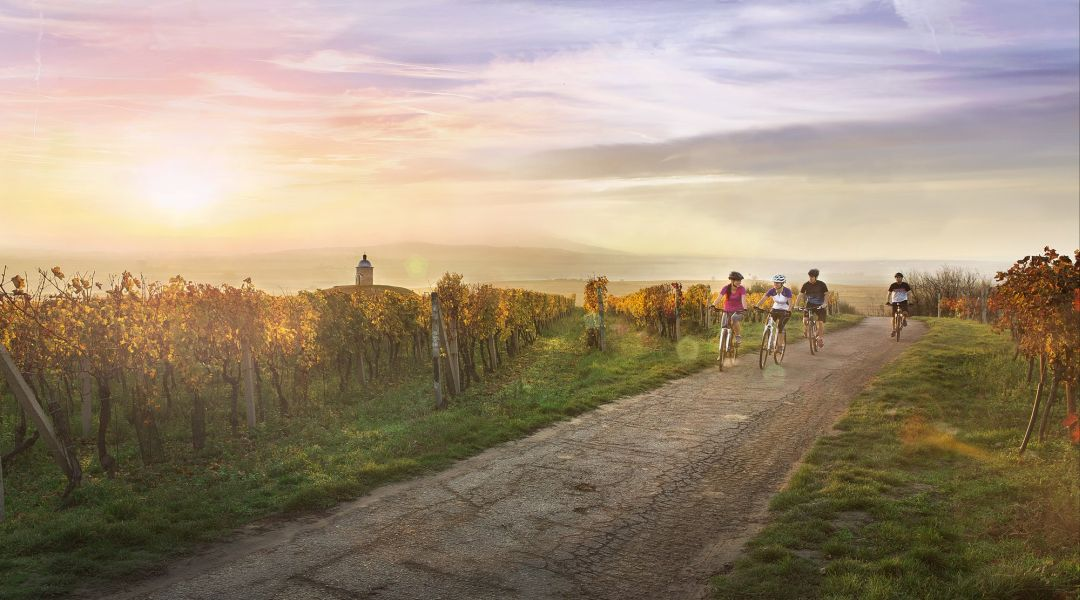 Fietsen tussen de Tsjechische wijngaarden