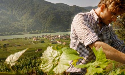 Wine Professional 2018: Mathias Hirtzberger