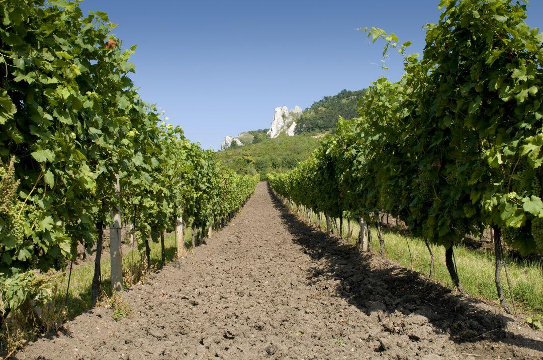 Wijngaard van Volarik
