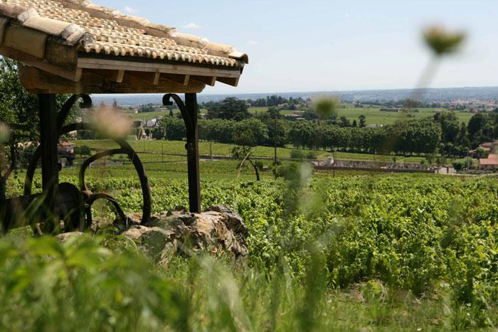 Wijngaarden in de Beaujolais