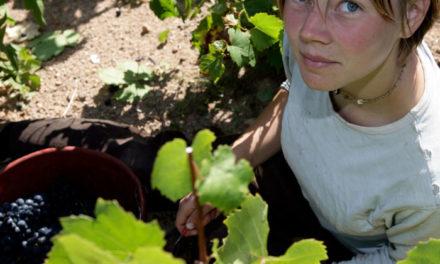 Beaujolais: breedte en diepte