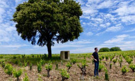 Bio-wijnbeurs in Montpellier