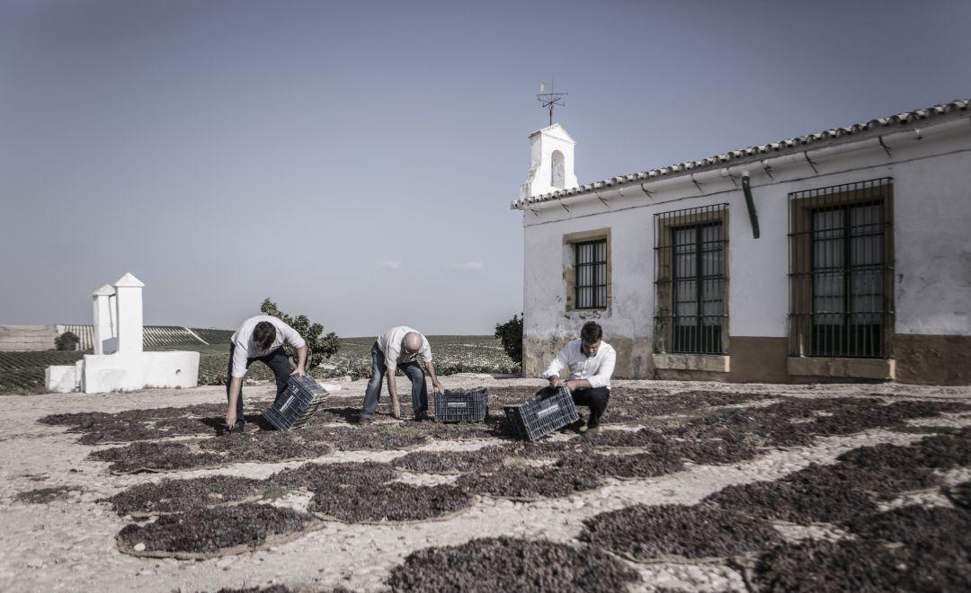 Ximénez-Spínola, Jerez