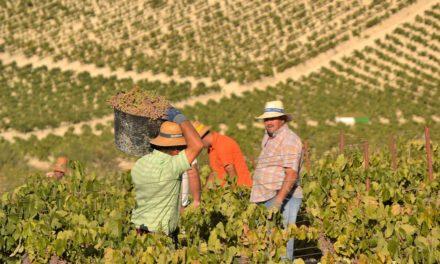 Valdespino: situatie in Jerez verbetert