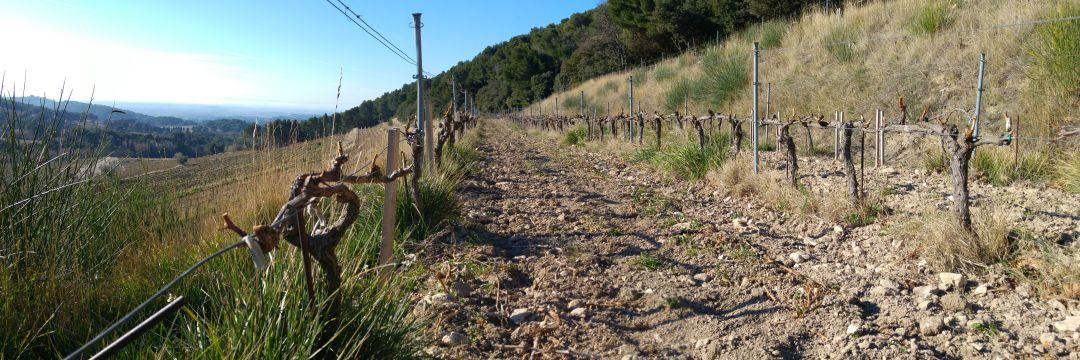Wijngaard Clos de Caveau