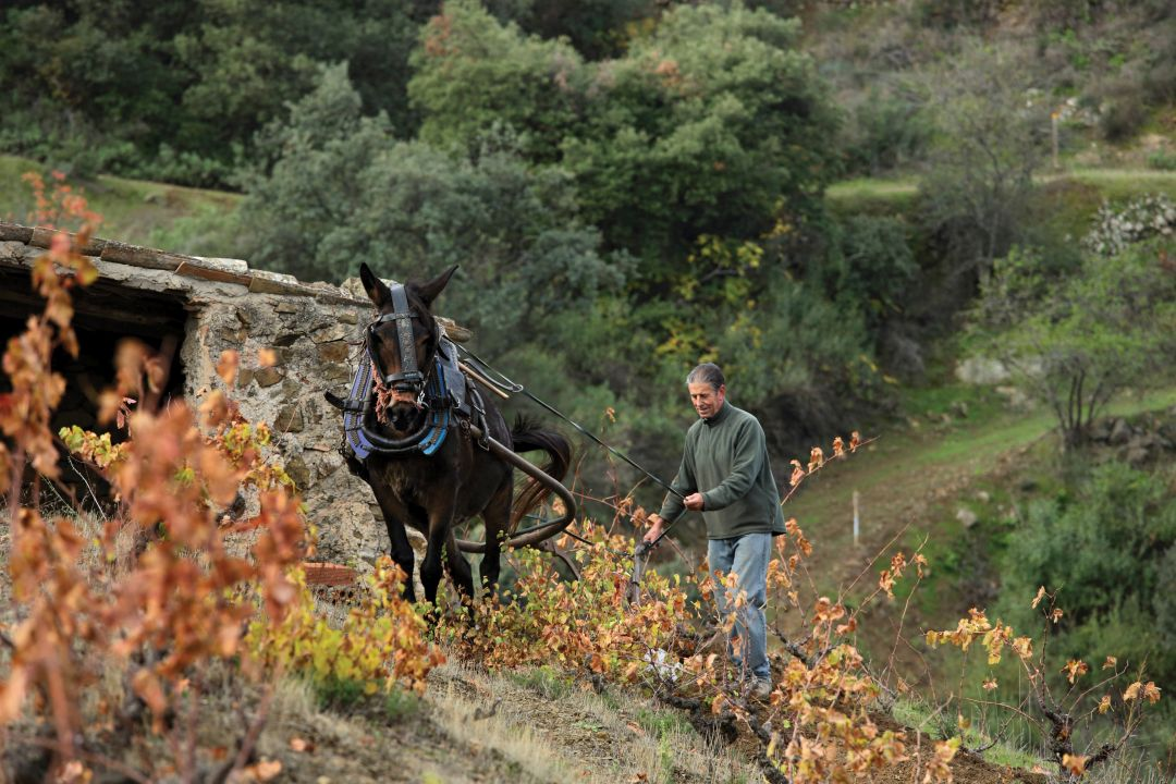In de wijngaard Arbossar