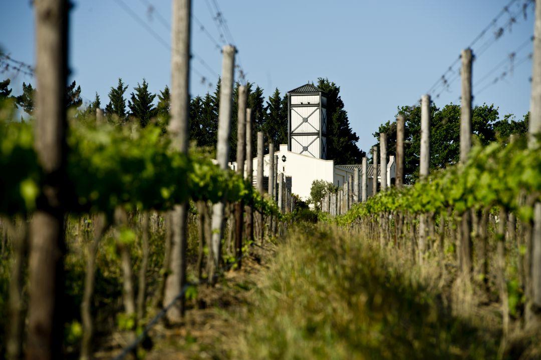 Winery De Toren