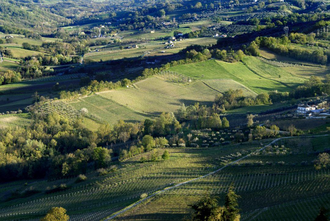 Wijngaarden Casacanditella