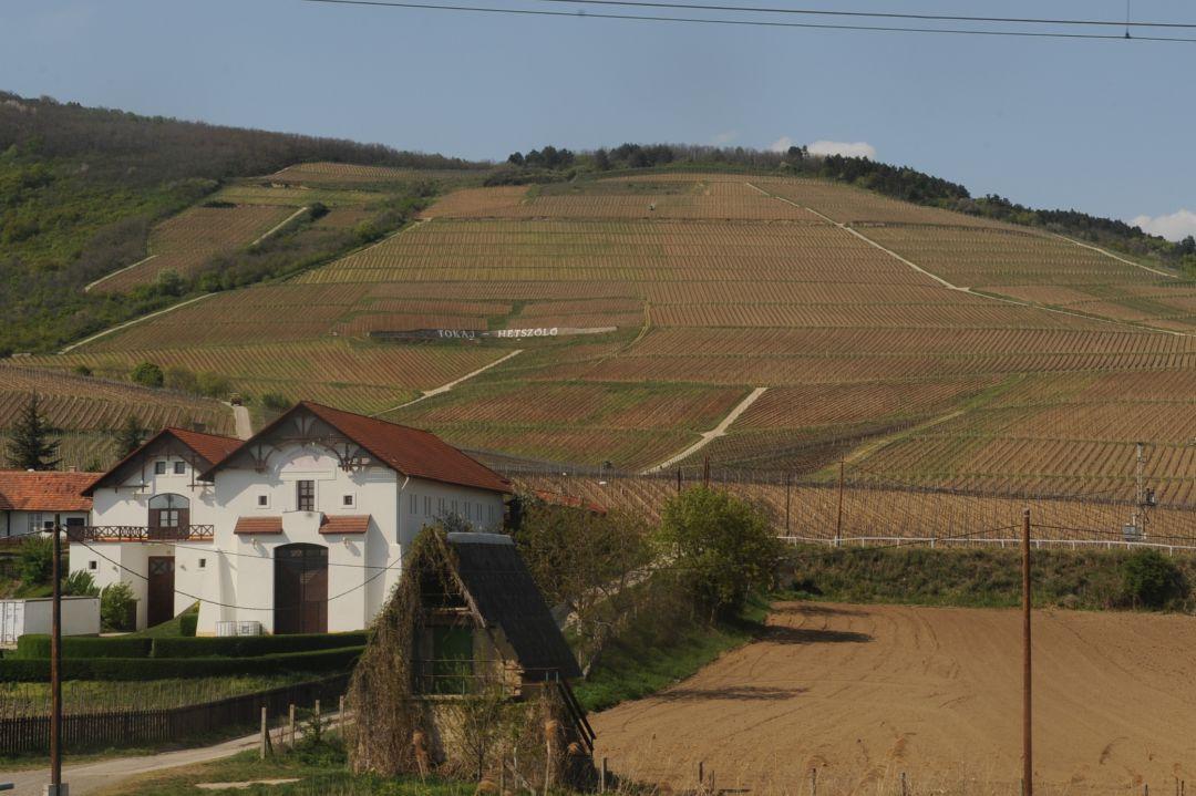 Wijngaarden Hetszolo