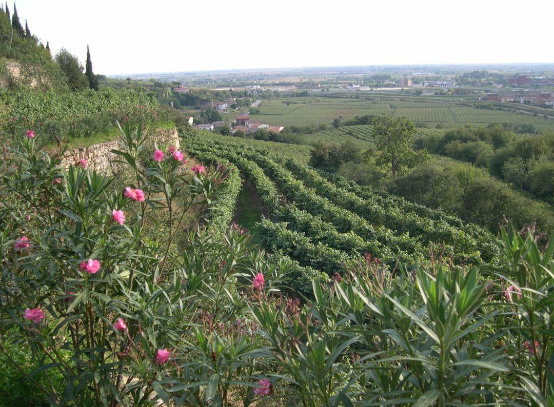 la rocca wijngaard