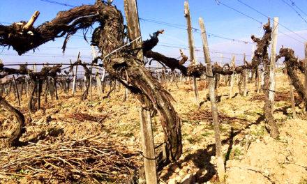 Tokaj: droge wijnen uit economische noodzaak
