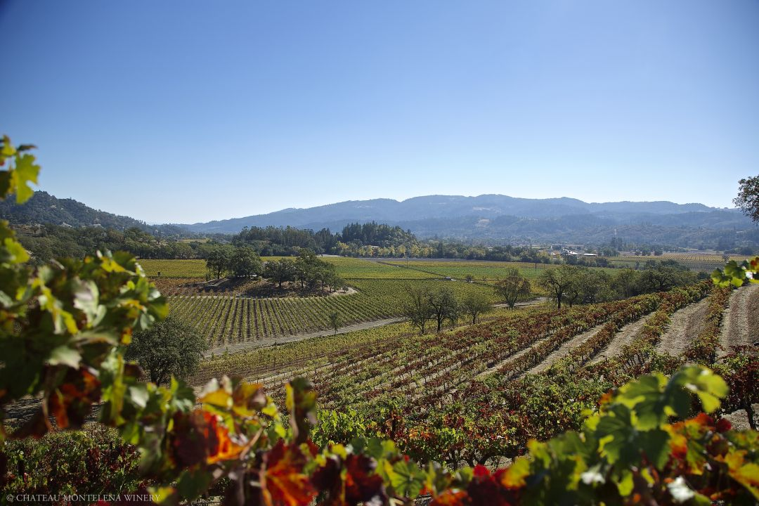 wijngaarden Montelena