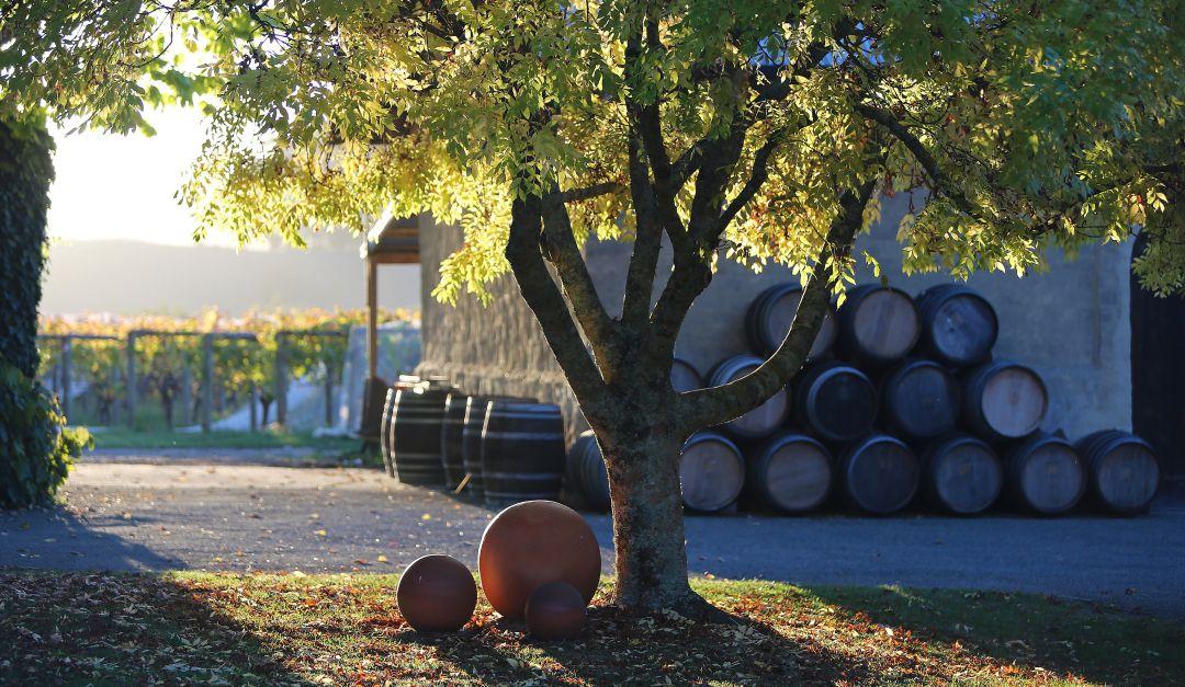Neudorf winery