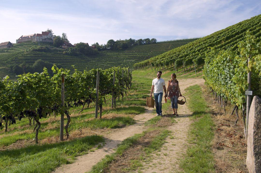 Wijngaard bij Durbach