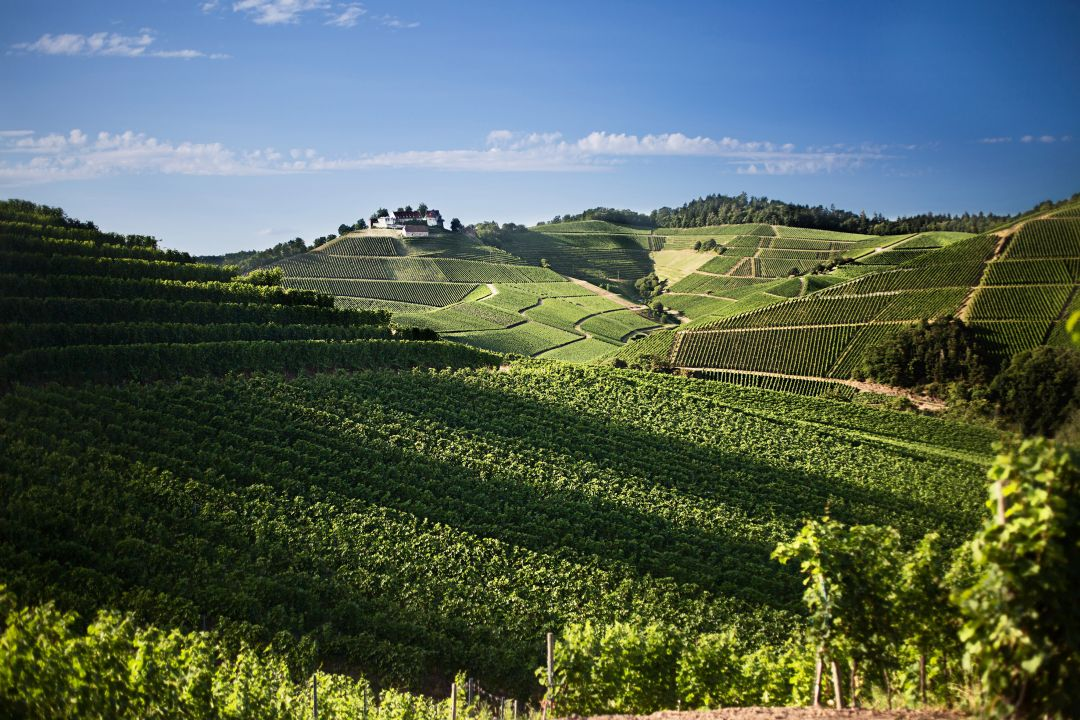 Wijngaarden van Schloss Staufenberg
