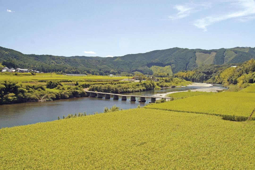 Mutemuka rijstvelden