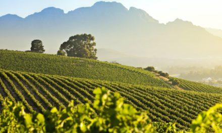 Tegenstrijdigheden komen samen op Cape Wine