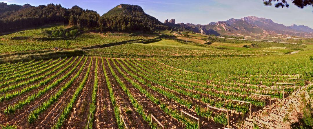 El Estepal wijngaard